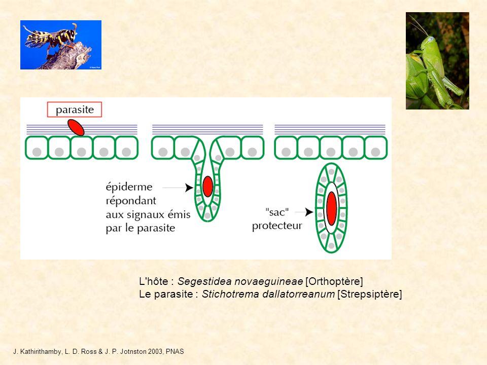 L hôte : Segestidea novaeguineae [Orthoptère]